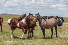 Cavalos selvagens bonitos no verão foto de stock royalty free