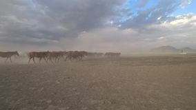 Cavalos selvagens de Yilki no campo, Kayseri, Turquia vídeos de arquivo