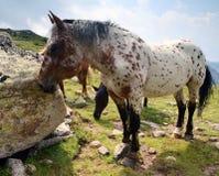 Cavalos selvagens em montanhas Foto de Stock