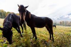 Cavalos selvagens em um prado Imagens de Stock Royalty Free