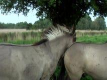 Cavalos selvagens no movimento lento vídeos de arquivo
