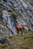 Cavalos selvagens no parque nacional de Fuentes Carrionas Palencia imagem de stock royalty free