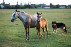 Cavalos selvagens no por do sol Imagem de Stock