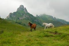 Cavalos selvagens que funcionam e que saltam Fotos de Stock Royalty Free