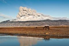 Cavalos sob a cinza vulcânica foto de stock royalty free