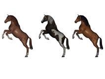 Cavalos traseiros Fotografia de Stock