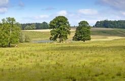 Cavan Pasture Stock Photo