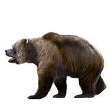 Cave bear Royalty Free Stock Photography