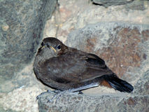 Cave Bird Stock Images