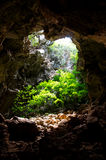 Cave covered with trees. Stock Photo