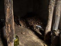 Cave de pomme de terre allumée par le soleil photographie stock libre de droits