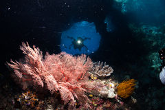 Cave Diving. In Raja Ampat ; West Papua Stock Photography