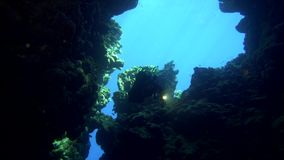 Cave diving underwater scuba divers exploring cave dive. Red Sea Egypt 4K stock footage