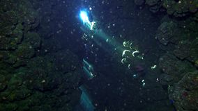 Cave diving underwater scuba divers exploring cave dive. Red Sea Egypt 4K stock video