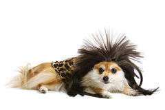 Cave Dog Royalty Free Stock Image