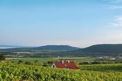 Cave et vignes dans la région de vin de Balaton, Hongrie images libres de droits