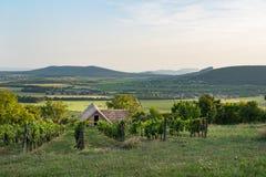 Cave et vignes dans la région de vin de Balaton, Hongrie images stock