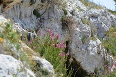 Cave with flowers. Colorful heat in front of cave on Malta Stock Photography