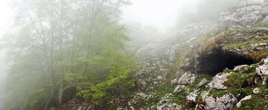 Cave in forest stock images