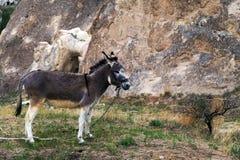 Cave monastery donkey Royalty Free Stock Photography