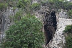 Cave with thousands of bats. Battambang, Cambodia. Mouth of a cave with thousands of bats coming out of it. Battambang, Cambodia Royalty Free Stock Images