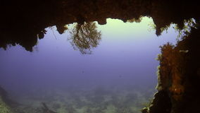 Cave underwater in Red sea. stock video