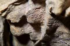 Cave wall closeup Royalty Free Stock Photography