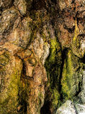 Cave wall with water, algae - background Royalty Free Stock Images