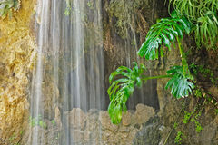 Cave, waterfall and aquatic plant in Parque Genoves, Cadiz Stock Photography