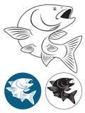 Cavedano del pesce Fotografia Stock