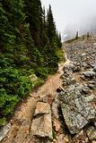 Cavell Meadows Hiking Trail Royalty Free Stock Photo