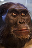 Caveman. Mask of the face of a caveman called Australopithecus Afarensis royalty free stock image