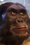 Caveman Royalty Free Stock Image