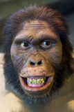 Caveman. Mask of the face of a caveman called Australopithecus Africanus stock photos