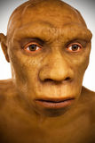 Caveman Model. This is a model of the face of a caveman reconstructed by American scientists and in exhibition at the New York Natural History Museum in New York royalty free stock images