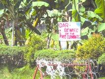 Cavendish banan przy Tadeco gospodarstwem rolnym w Santo Tomas, Davao Del Norte, Obraz Stock