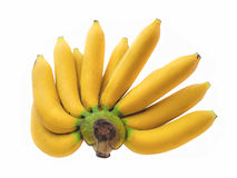 Cavendish banana Stock Image