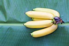 Cavendish banana owoc Obrazy Stock