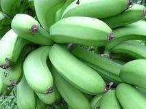 Cavendish bananas Stock Image