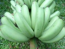 Cavendish bananas Royalty Free Stock Images