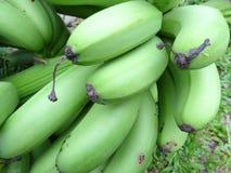 Cavendish bananas Royalty Free Stock Photo