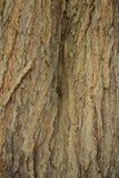 caver页的胶合板纹理木颜色 免版税库存图片