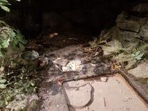 Caverna com escudos da tartaruga e ferramentas da arqueologia imagem de stock royalty free