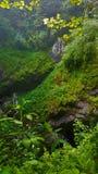 Caverna con muschio e un albero fotografie stock