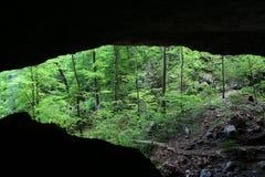 Caverna da floresta Fotografia de Stock Royalty Free