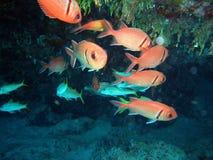 Caverna de los pescados Imagen de archivo libre de regalías