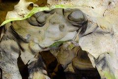 Caverna dei crani Immagini Stock
