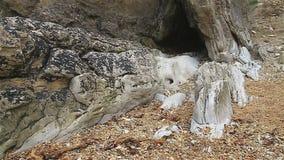 Caverna del mare a bassa marea archivi video