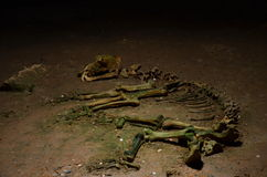Caverna dell'orso, Romania Fotografia Stock
