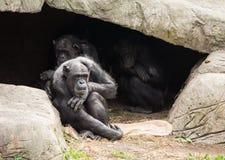 Caverna della scimmia Fotografie Stock